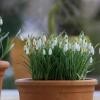 Białe kompozycje kwiatowe - kwiaty na balkon i taras