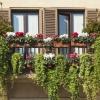 Bluszcz na taras i balkon