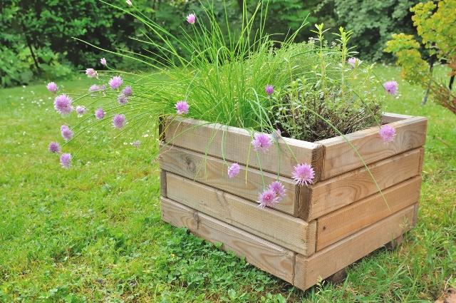 Duża skrzynia drewniana przyda się do tworzenia kompozycji składającej się z różnorodnej roślinności
