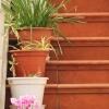 kwiaty-na-schodach