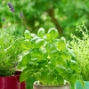 Rośliny na balkonie