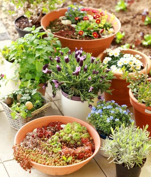 Kompozycja roślinna z doniczkami ceramicznymi