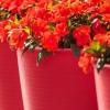 Doniczki plastikowe w wyrazistym kolorze