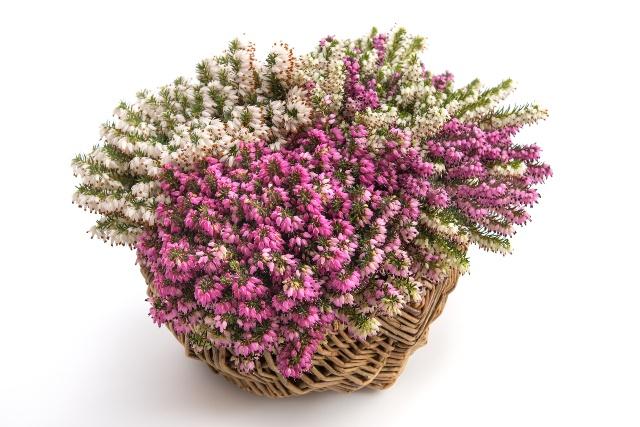 Jesienne Kwiaty Na Balkon I Taras Rośliny Na Taras I Balkon