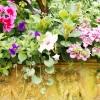 Kompozycje roślinne w donicach
