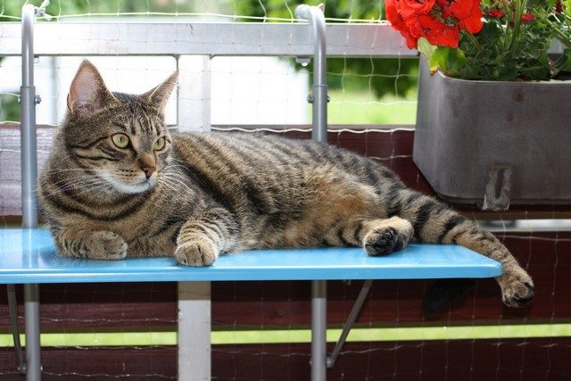 kot na balkonie zabezpieczenie balkonu bezpieczny balkon dla kota. Black Bedroom Furniture Sets. Home Design Ideas