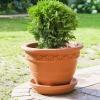 krzewy-na-balkon-i-taras-krzewy-odporna-na-mroz-2-jpg