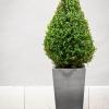 krzewy-na-balkon-i-taras-krzewy-odporna-na-mroz-5-jpg