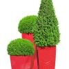 krzewy-na-balkon-i-taras-krzewy-odporna-na-mroz-6-jpg