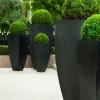 krzewy-na-balkon-i-taras-krzewy-odporna-na-mroz-7-jpg