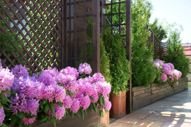Krzewy Na Taras I Balkon Jakie Rośliny Na Taras Wybrać