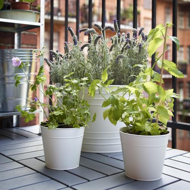 Ogród Na Balkonie Czyli Pomysł Na Mały Balkon