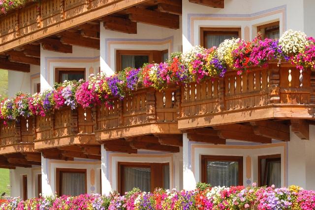 Jakie ro liny na balkon po udniowy wybra ro liny na for Gerani tirolesi
