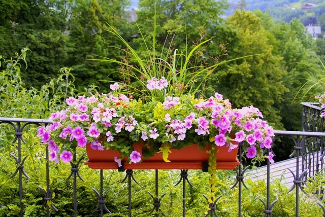 Jakie Rośliny Na Balkon Południowy Wybrać Rośliny Na