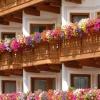 Rośliny na słoneczny balkon
