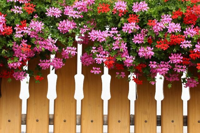 Kwiaty Zwisajace Na Sloneczny Balkon Q Housepl