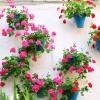 Rośliny wiszące na balkon i taras