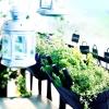 balkon-aranzacja_ziola-jpg