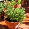 ziola-uprawa-warzywa-jpg