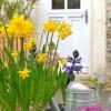 wiosenne-kwiaty-na-balkon-i-taras-jpg