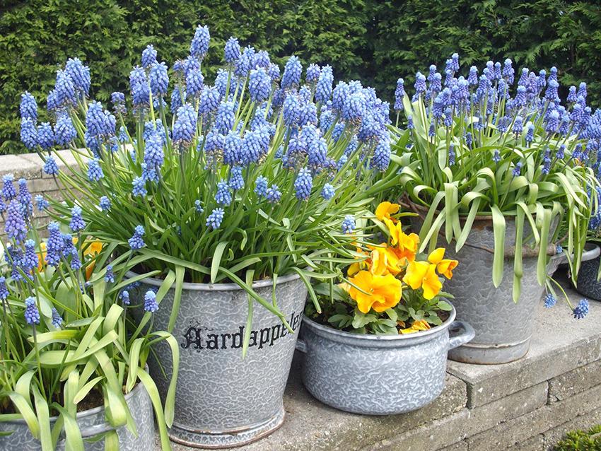 Wiosenne Kwiaty Na Balkon I Taras