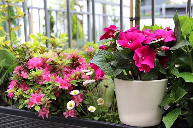 Ro liny na tarasie donice doniczki na taras i balkon for Plantas de terraza resistentes