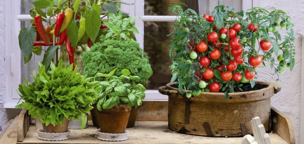 Warzywa Na Taras I Balkon Warzywnik Na Taras I Balkon