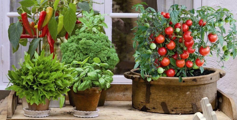warzywa taras balkon