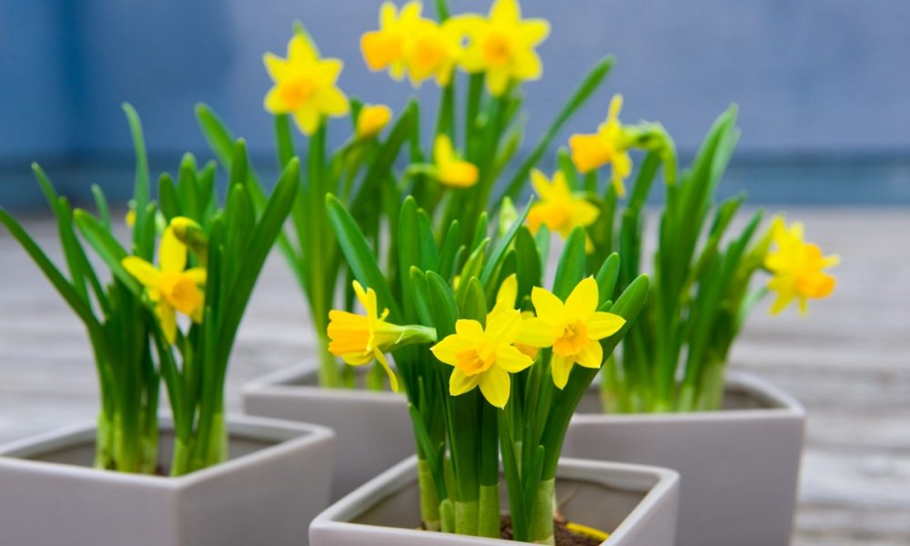 wiosenne kwiaty na taras balkon