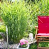 Trawy – oschła elegancja, czyli odpowiednie rośliny na taras i balkon