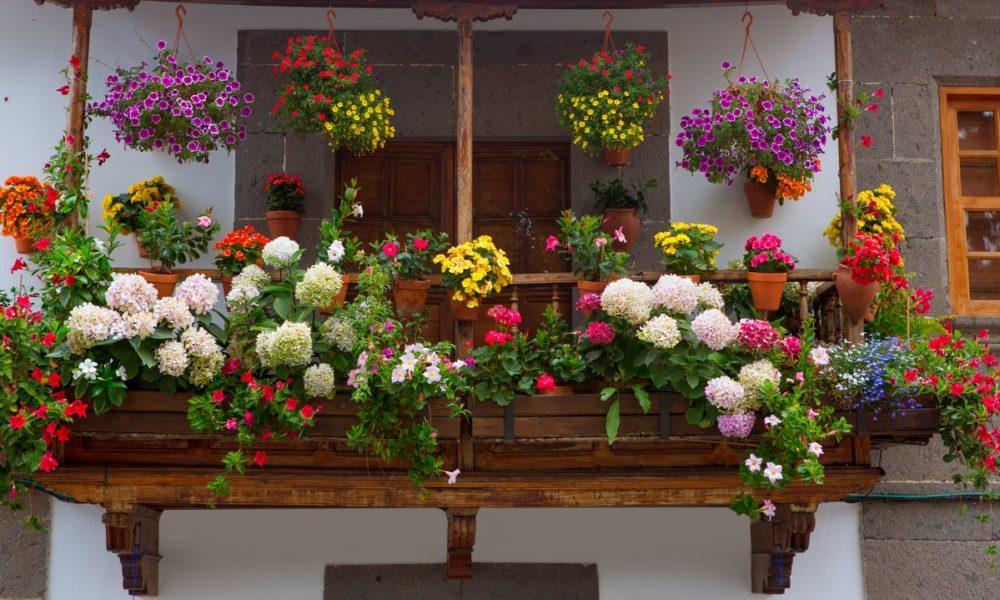 kompozycje roślinne na balkon i taras