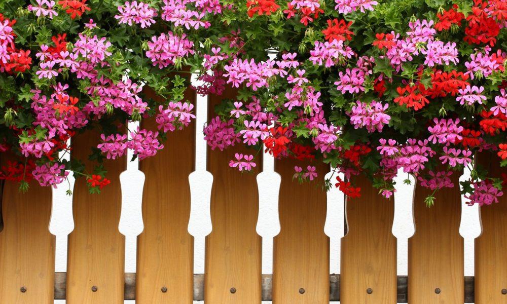 rośliny wiszące na taras i balkon