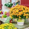 Jesienne kwiaty na balkon i taras