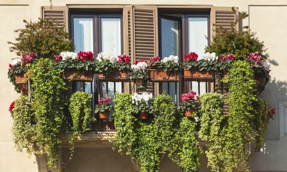 bluszcz na balkonie i tarasie