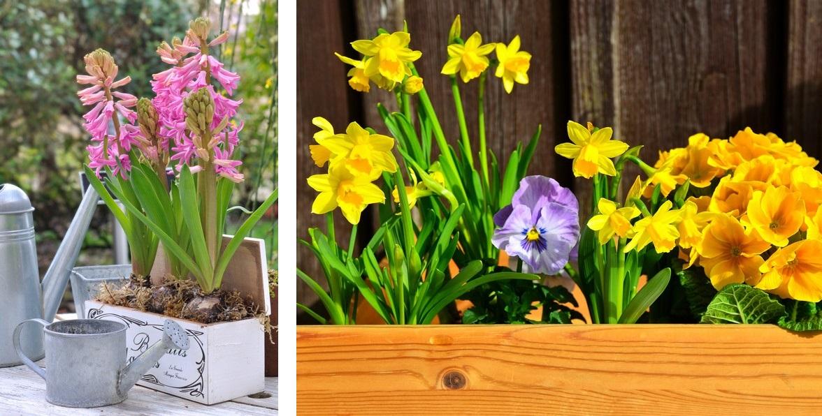 jacinthes dans jardinire dcorative sur table de jardin