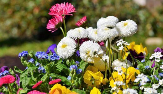 kwiaty na taras i balkon